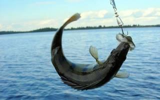 База отдыха на нижней волге недорого рыбалка