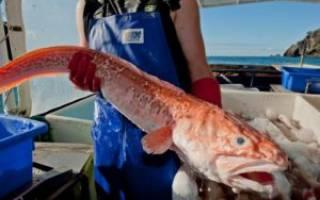 Сколько варится рыба конгрио