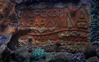 Какие рыбы живут в океанариуме