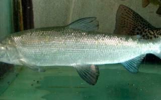 Озеро тугунды рыбалка