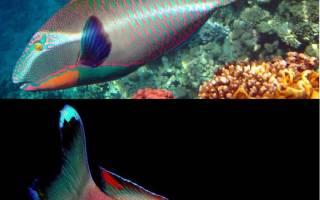 Картинки рыбы из моря