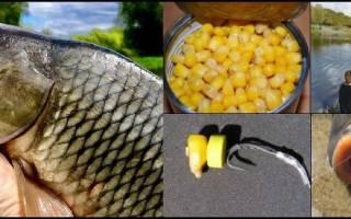 Кукуруза насадка для карпа