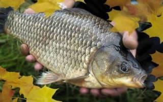 Ловля рыбы осенью карася
