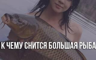 К чему большая рыба