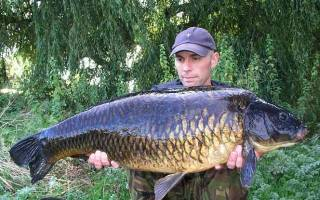 Итальянская прикормка для рыбалки фиш голодная рыба