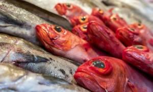 Температура хранения рыбы горячего копчения