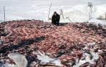 Какое давление нужно для клева рыбы