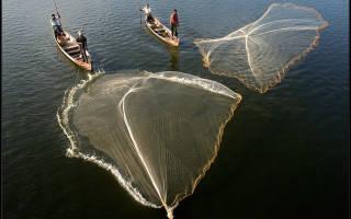 Как ловить накидной сетью рыбу