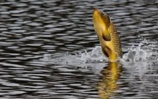 Какое нормальное давление для рыбалки на карпа