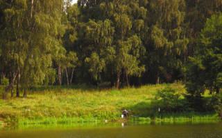 Где в дмитрове рыбу ловить