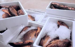 Можно ли замораживать рыбу не чистя
