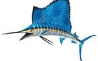 Максимальная скорость рыбы парусника