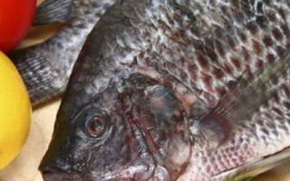 Рыба тилапия (телапия): польза и вред