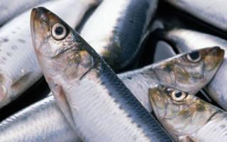 Самая популярная рыба у россиян — сельдь