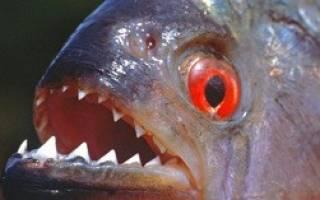 Какие рыбы обитают в пресной воде