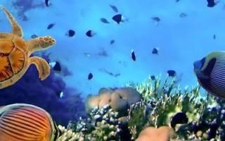 Содержание аквариумных сомов