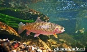 Форель фото рыбы цвет