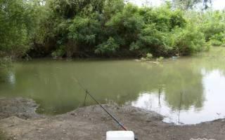 Какая рыба водится в реке нива