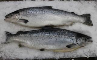 Какая рыба живет в сточных водах