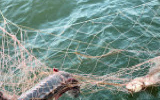 Санкции за ловлю рыбы сетями