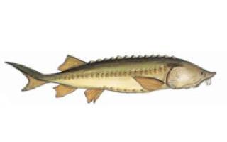 Прогноз клева рыбы во владимире
