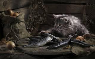 Можно ли кошкам есть сырую морскую рыбу