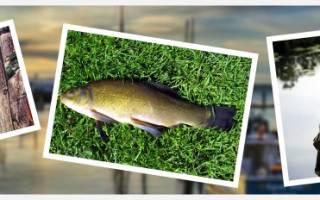 Как чистить рыбу линь от чешуи