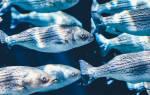 Бизнес план промышленное разведение рыбы