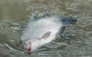 Снасти для осенней рыбалки на реке