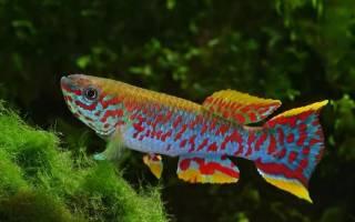Какие рыбы долго живут