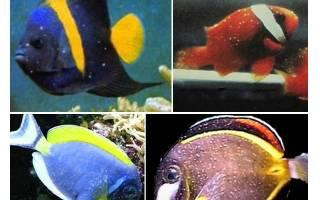Болезни морских рыб в аквариуме с фотографиями