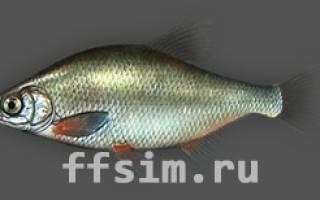 На что клюет густера в реальной рыбалке