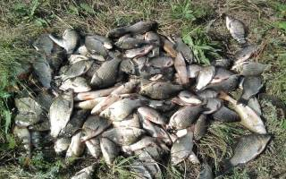 Озеро ольховое уфа рыбалка отзывы