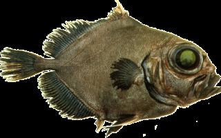Блюда из рыбы дори