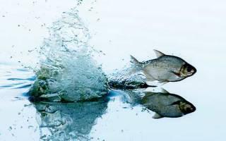 Штраф за пойманную рыбу во время нереста