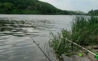Где хорошо ловится рыба на дону